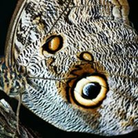 nos-metiers-papillon